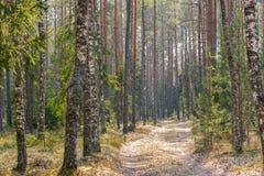 Grusväg i den blandade skogen i tidig vår fotografering för bildbyråer