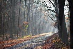 Grusväg in i dimman Royaltyfri Fotografi