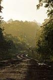 Grusväg i djungeln Arkivbilder