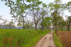Grusväg i en asiatisk skog royaltyfria foton