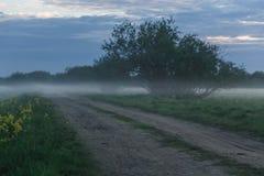 Grusväg i ett vetefält på en dimmig morgon Royaltyfria Foton