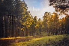Grusväg i skogen Royaltyfria Bilder