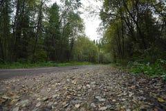Grusväg i skogen i sommaren Arkivfoton