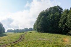 Grusväg på en äng som omges av den gröna skogen royaltyfri foto