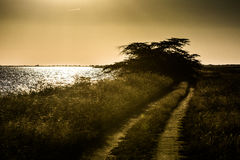Grusväg på solnedgången royaltyfri bild