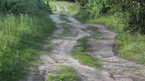 Grusväg till och med björkskog stock video