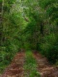Grusväg till och med den mexicanska djungeln arkivbild