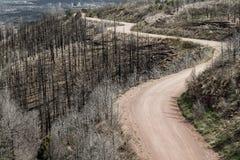 Grusväg till och med Waldo Canyon Forest Fire i Colorado royaltyfri bild
