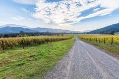 Grusvägbortgång till och med vingård i höst Australiskt land Royaltyfri Bild