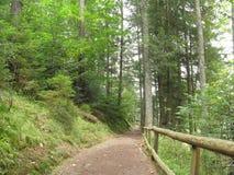 Grusvägen sörjer igenom skogen Arkivfoto