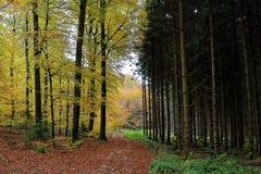 Grusväg mellan den ljusa och mörka skogsmarken Arkivbild