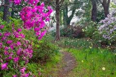 Gruta Charleston South Carolina del jardín de la naturaleza imágenes de archivo libres de regalías