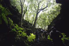 Gruta das Torres Cave Royalty Free Stock Photo