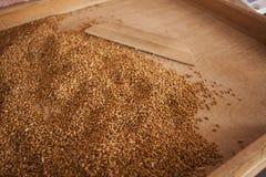 Gruttensteekproeven in landbouwmolen stock foto