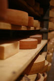 Gruyere cheese. Cow milk cheese, stored in a wooden shelves Royalty Free Stock Photos