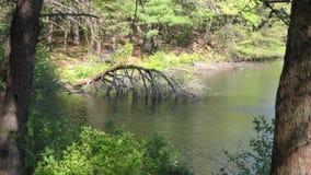 Gruzińskie Fort Mountain A martwe drzewo skłaniające się do jeziora Fort Mountain zbiory