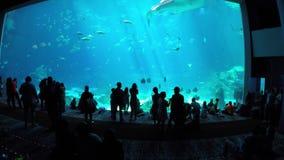 Gruzja akwarium zbiory wideo