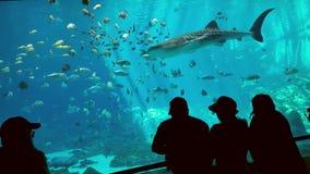 Gruzja akwarium Fotografia Stock