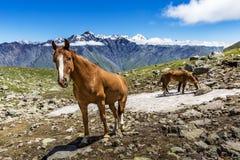 Gruzja, Kaukaz zdjęcie royalty free