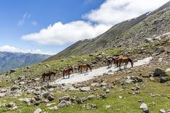 Gruzja, Kaukaz zdjęcia royalty free