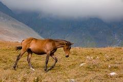 Gruzja natury góry krajobrazy Fotografia Royalty Free