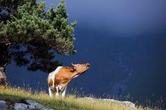 Gruzja natury góry krajobrazy Obraz Stock