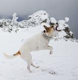 Gryźć snowball Zdjęcia Stock