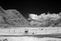 Góry Altai stanu Biospheric Naturalna rezerwa, Rosja Zdjęcie Royalty Free