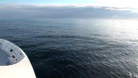 Gry i havet bland isberg och is i arktisk lager videofilmer