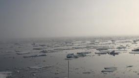 Gry i havet bland isberg och is i arktisk arkivfilmer