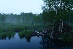 Gry moonset över sommarskogen och bäverkojan Royaltyfri Fotografi
