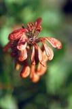 Góry rakiety kwiat Obrazy Royalty Free