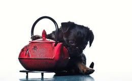 Gryfonu dziecka psa teapot czerwony studio Obrazy Royalty Free