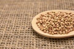 Gryk adra zdrowa żywność Neutralny tło łyżka drewniana Fotografia Stock