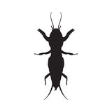 Gryllotalpidae silhouette.European mole cricket Royalty Free Stock Photography