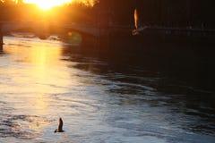 Gryning över floden Fotografering för Bildbyråer
