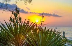 gryning exponerad rockhavssun Skura palmliljacloseupen på en bakgrund av resningsolen Grekland Arkivfoton