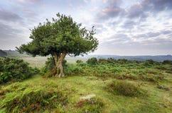 Gryning i den nya skogen Fotografering för Bildbyråer