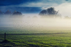 Gryning i dimman Royaltyfri Bild