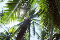 Gryning i djungeln Koh Samui Arkivfoton