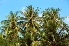Gryning i djungeln Palmträd Koh Samui Arkivfoto