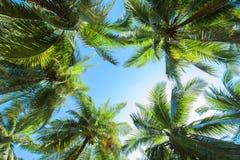 Gryning i djungeln Palmträd Koh Samui Royaltyfri Bild