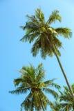 Gryning i djungeln Palmträd Koh Samui Royaltyfri Foto