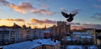 Gryning i Moskva över hus och en härlig stadssoluppgång reflekterad i fönstren av höghus och skyskrapor på en frostig vinter royaltyfria bilder