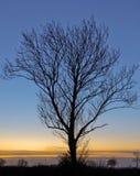 Gryning med det avlövade trädet Arkivfoton