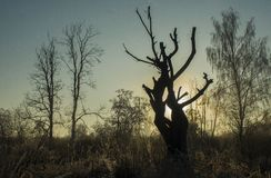 Gryning på skogfloden royaltyfri bild