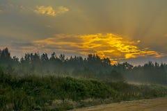 Gryning på skogvägen tidig höst september arkivbild