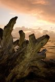 gryningdriftwood arkivbilder