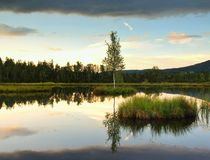 Gryninghöstsjö Avspegla vattennivån i den mystiska skogen, ungt björkträd på ön i mitt Royaltyfri Foto