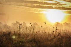 Gryningmist och torrt gräs Arkivbilder